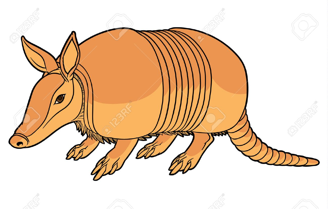 illustration of a cute cartoon armadillo royalty free cliparts