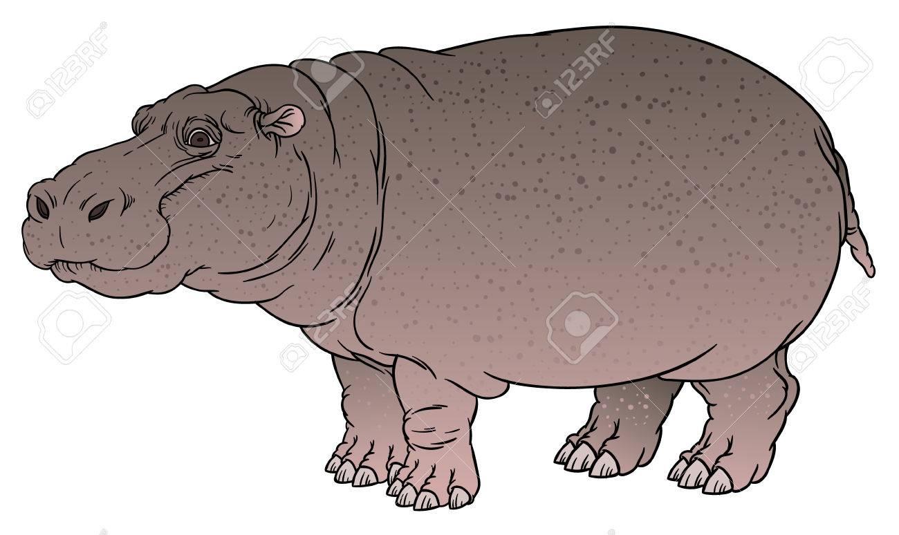 naturalistic vector hand drawing illustration of hippo or Hippopotamus amphibius or river horse - 51099366