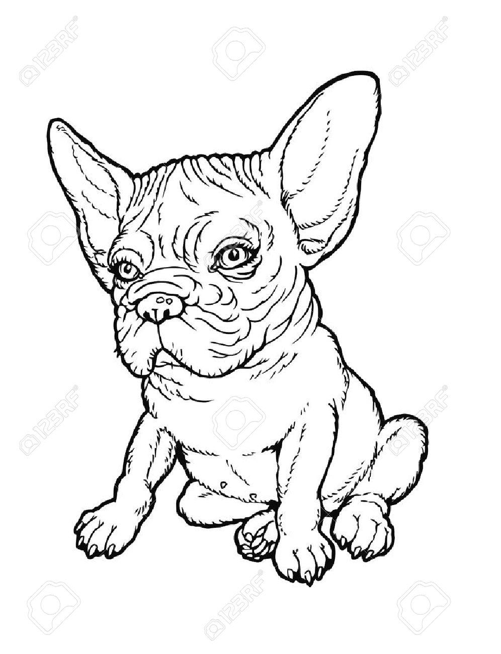 Schwarz Weiß Welpen Prall Französisch Bulldog Zeichnen Aus Einer