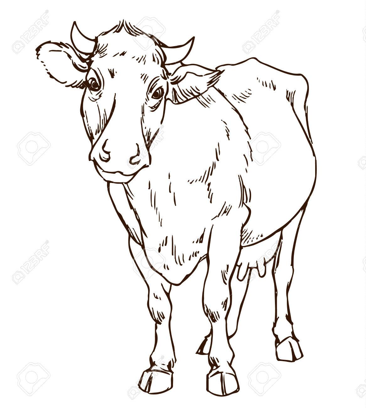 Cute Naturalistic Cow Line Drawing Hand Drawing Sketch Stock Vector 51352820