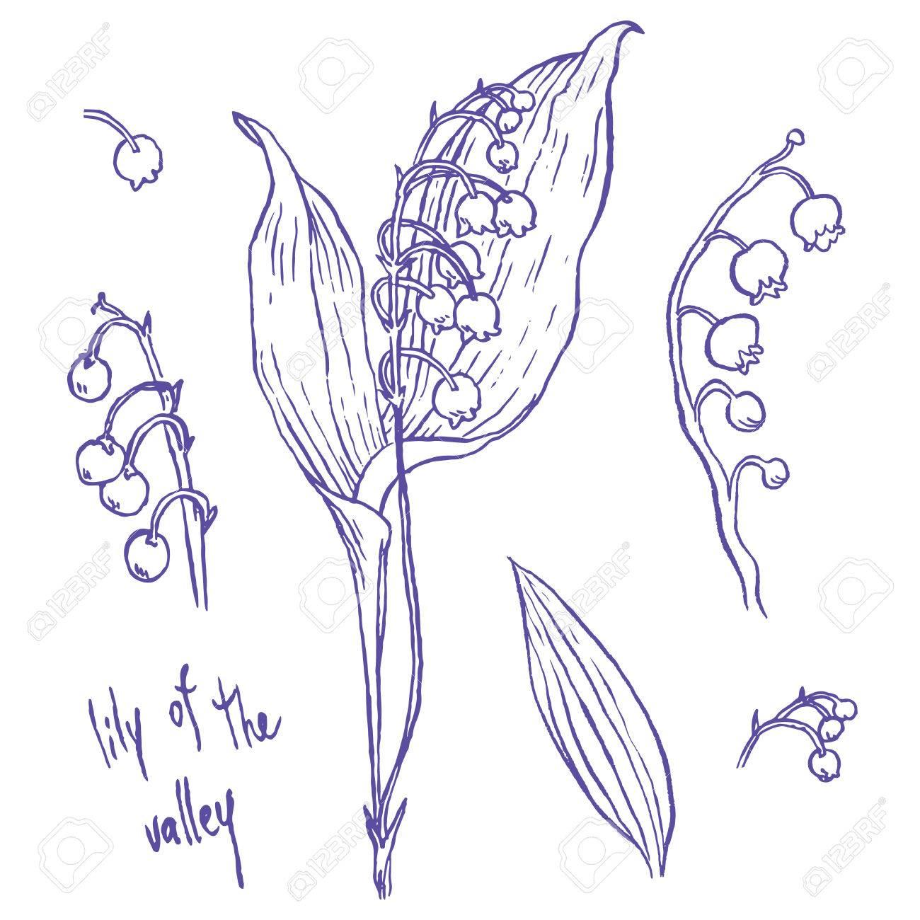 Muguet Illustrations Vectorielles De Dessin A Main Fixe Clip Art
