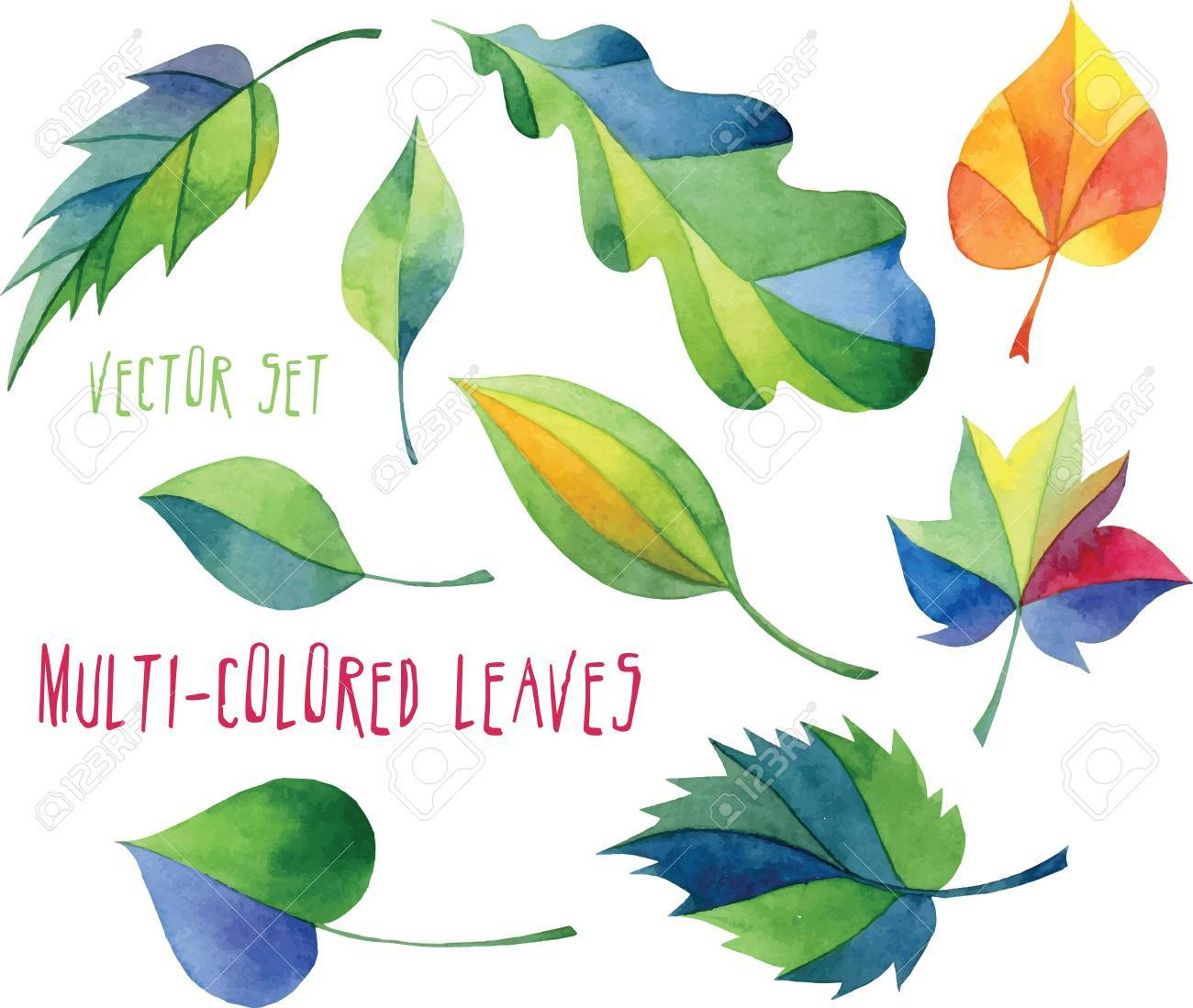 Set Of Multicolored Leaves Of Different Trees - Vector Design ...