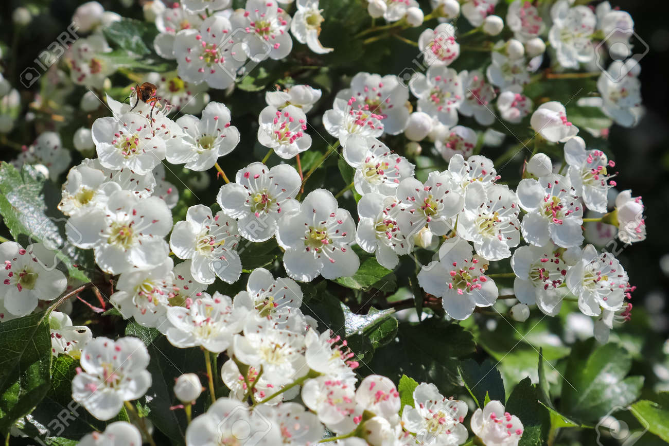 Beautiful cherry and plum trees in blossom during springtime with colorful flowers. - 169911715