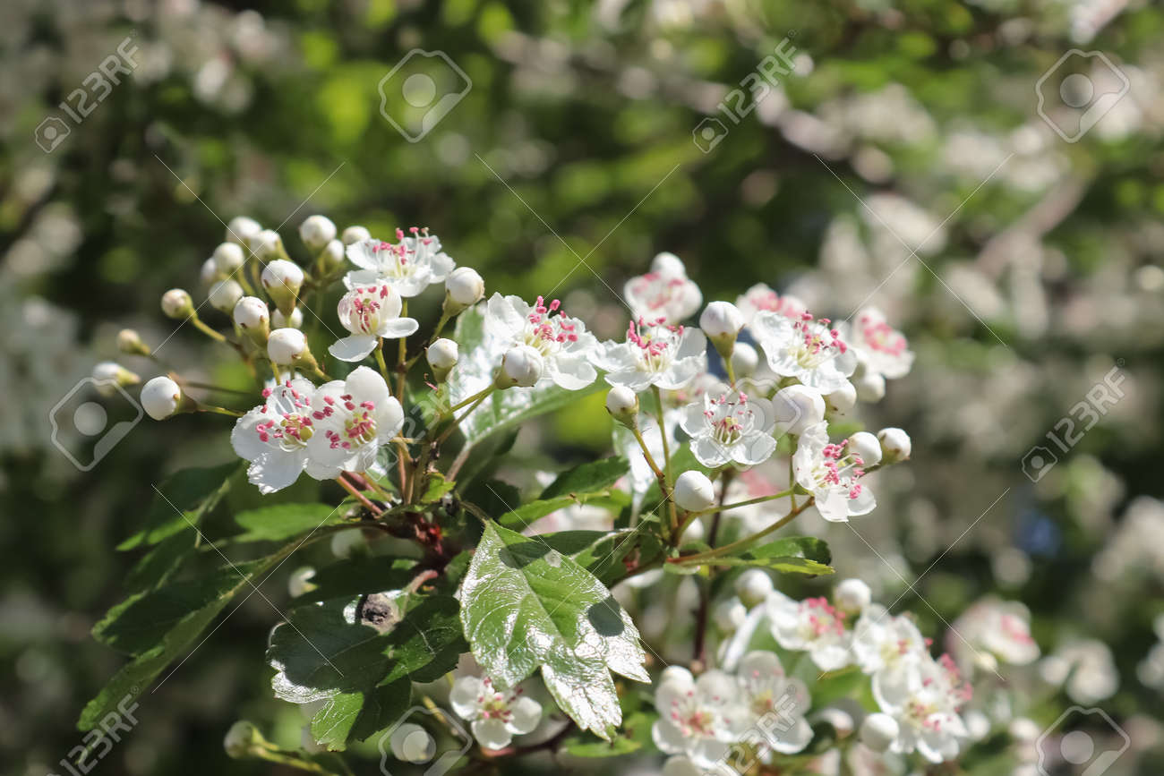 Beautiful cherry and plum trees in blossom during springtime with colorful flowers. - 169911838