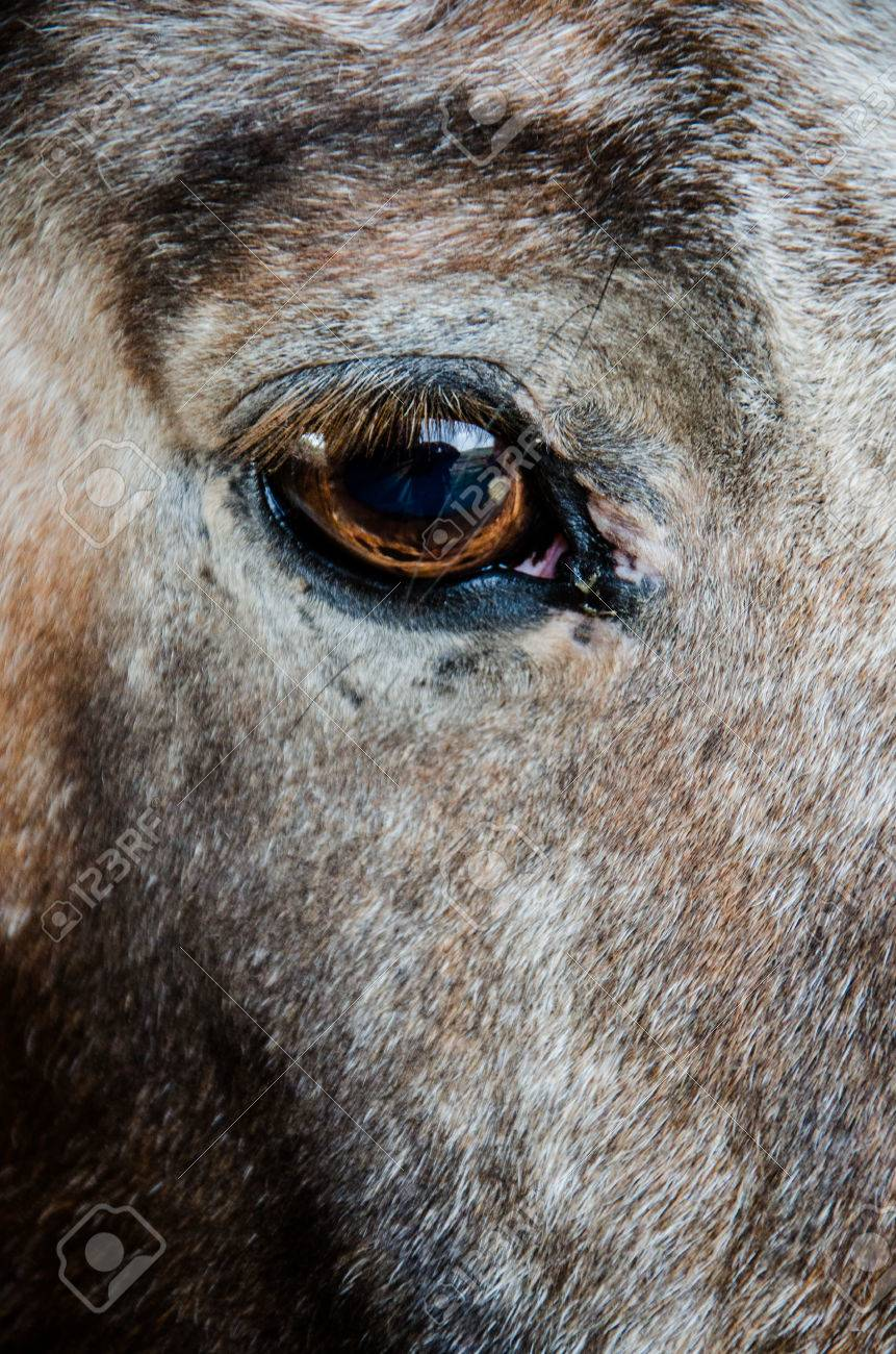 Close Up Image Of Brown Tan And White Horses Eye Stock Photo Picture And Royalty Free Image Image 24815867
