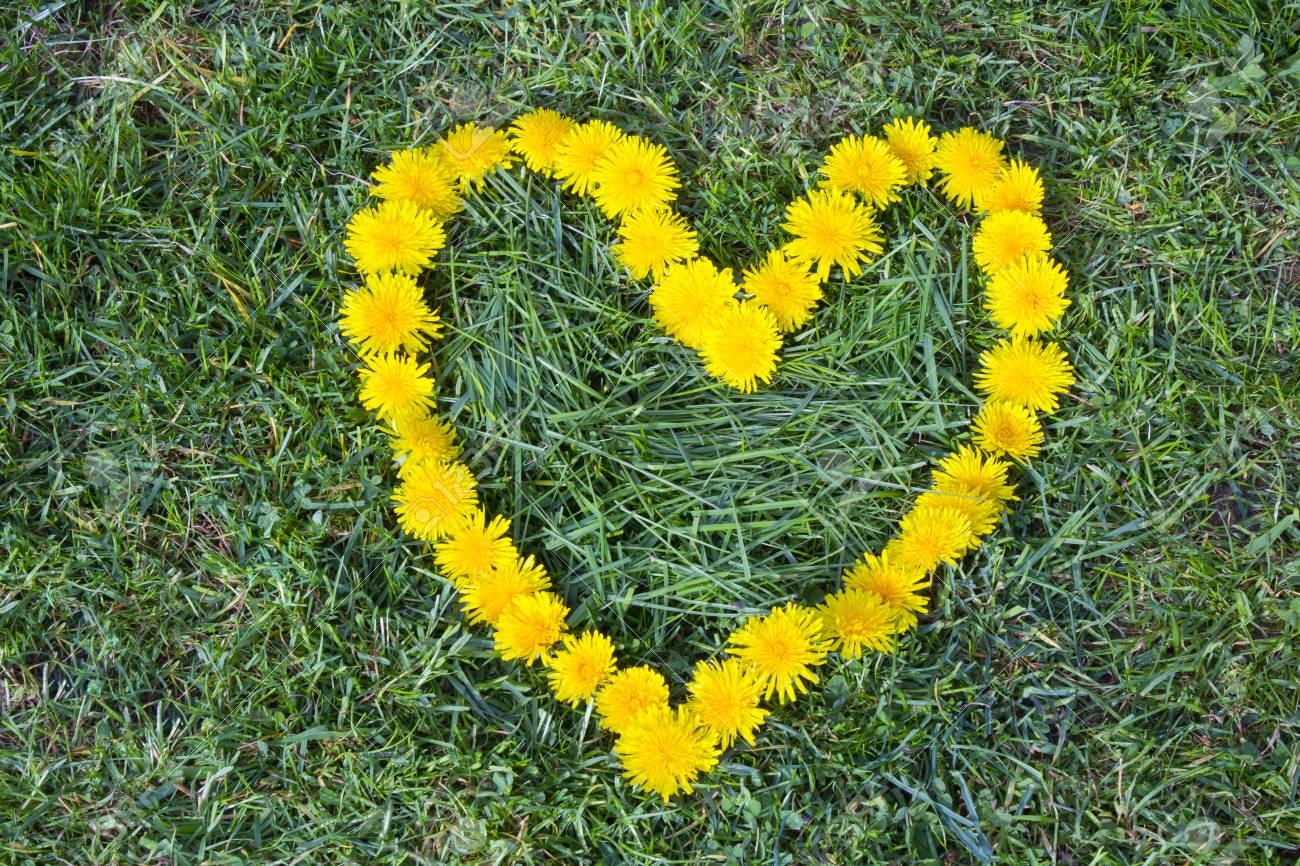 Heart Flower Made Of Dandelion Yellow Flowered Weed Flowers