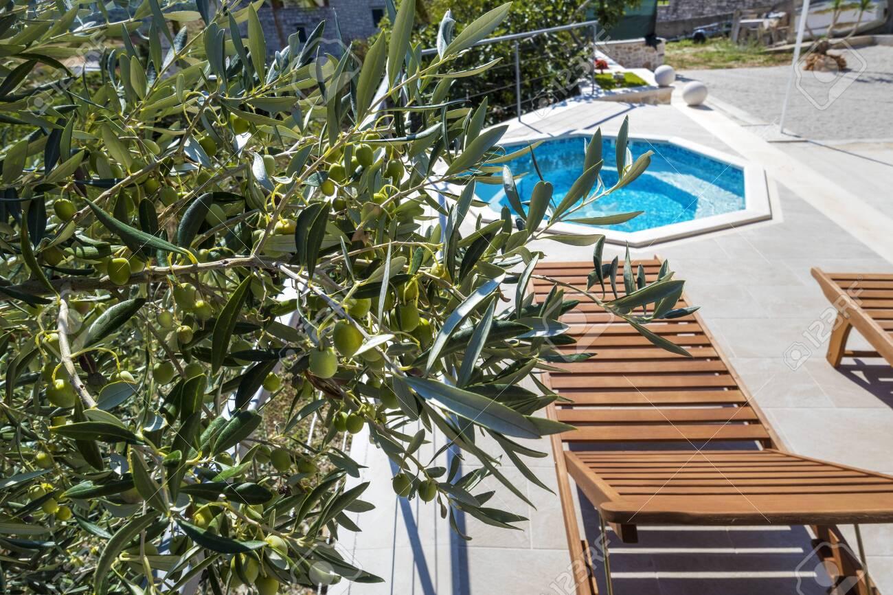 Wooden deck chair near pool in olive yard near luxury apartments on island Brac in Croatia - 133828585