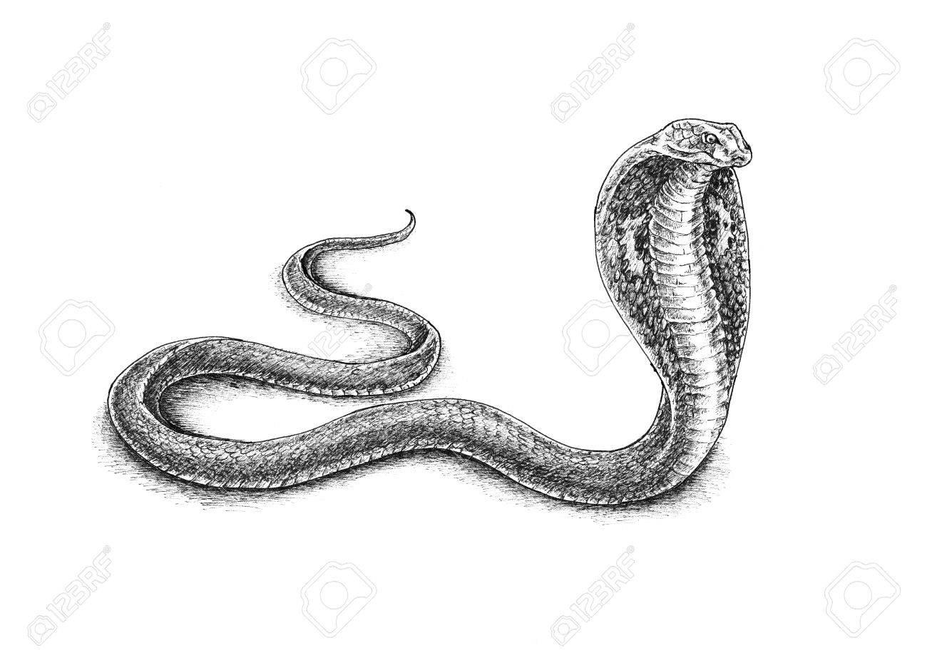Dessin Cobra dessin à la main cobra banque d'images et photos libres de droits