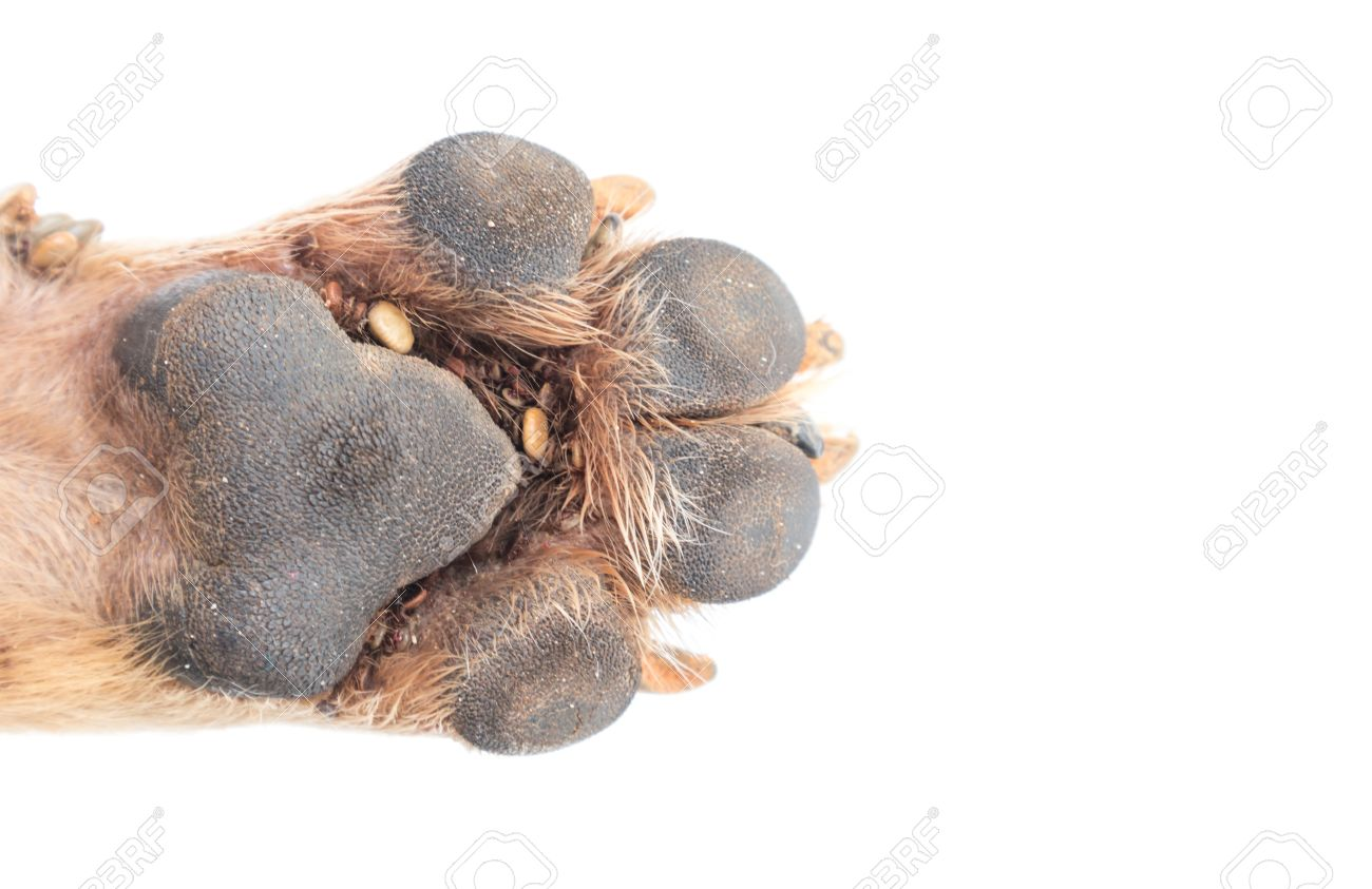 Dog Foot Pads - Famous Dog 2018