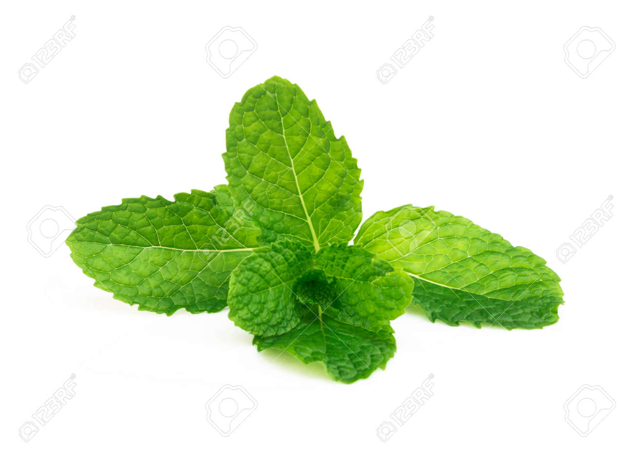 Fresh green mint leaves isolated on white background, Herb and medical concept - 120851208