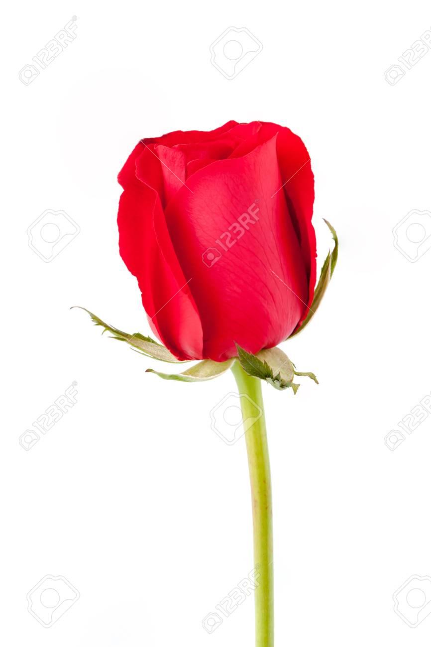 Concept De L Amour Ou Le Theme De La Saint Valentin Gros Plan Une