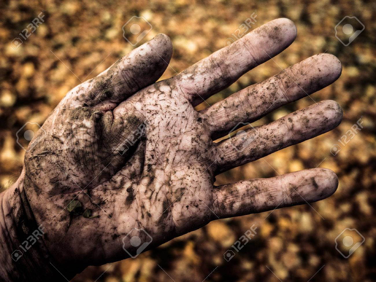 The Dirty Hand Of A Farmer Or Gardener Outside In Autumn Stock Photo ...