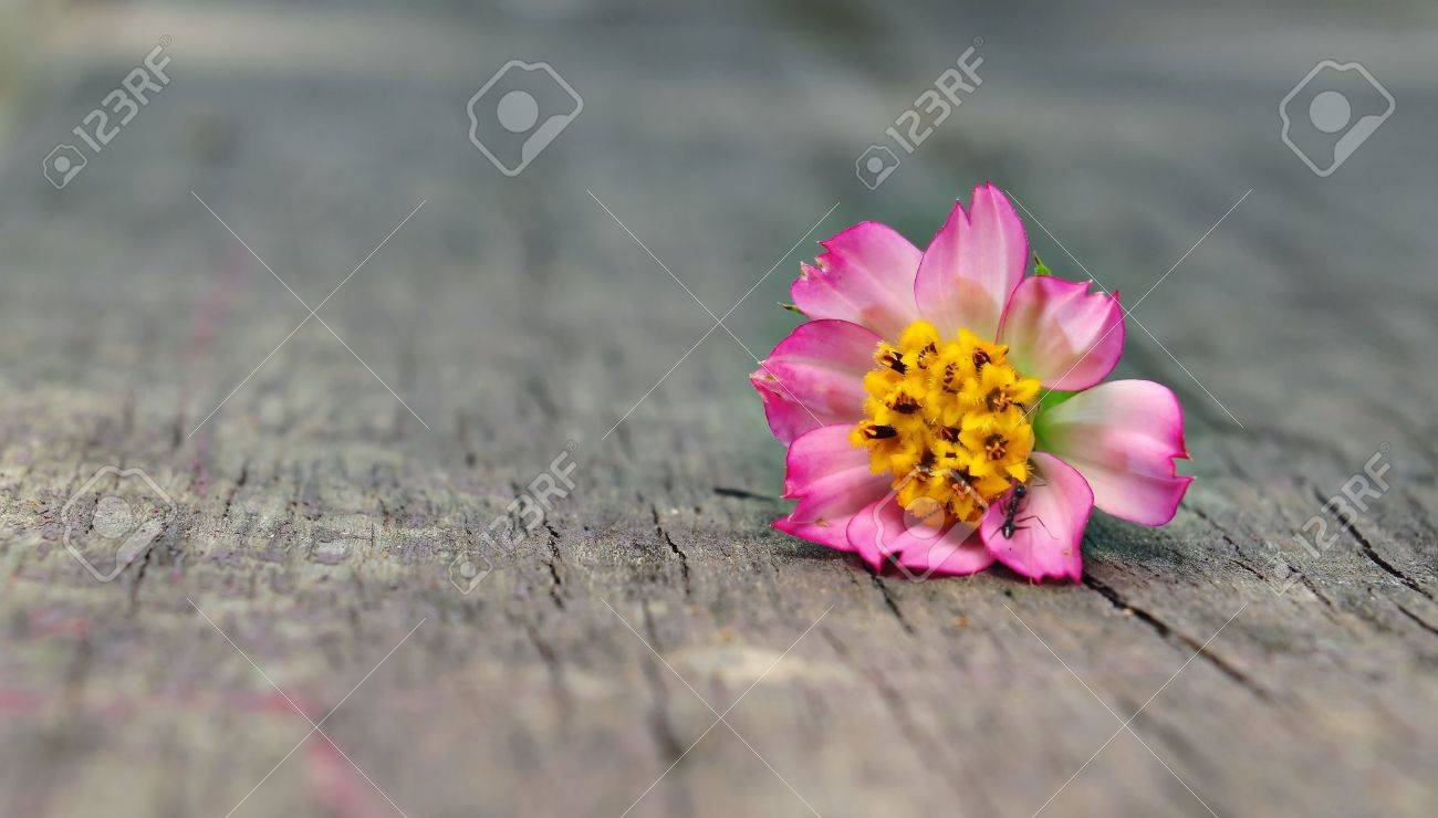Colourful close up flower on wood Isolated Stock Photo - 9866631