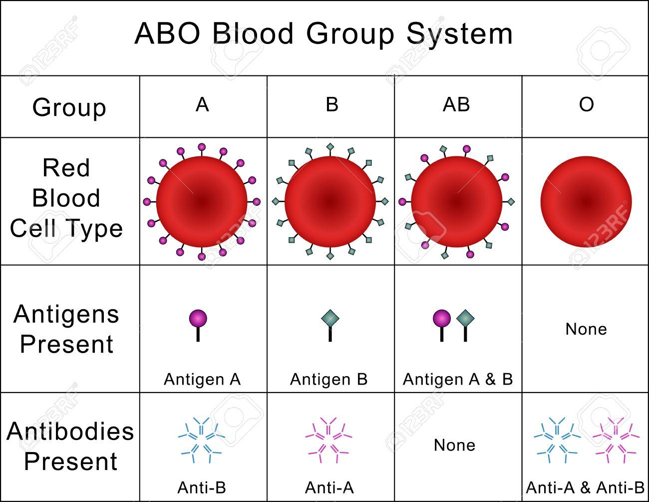 Abo 式血液型システム ロイヤリ...