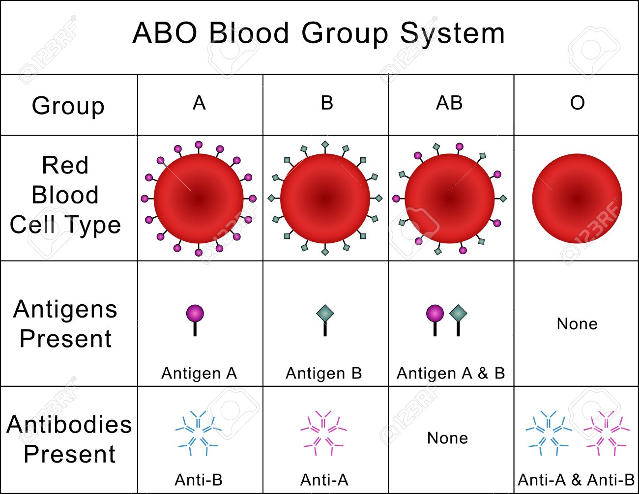 ABO Blood Group System - 39761591