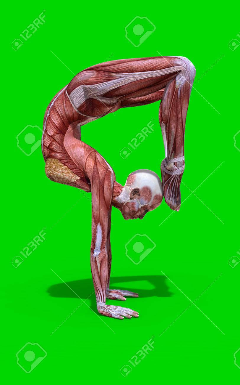 3D Digital Render Of A Scorpion Pose Female Anatomy Figure With ...