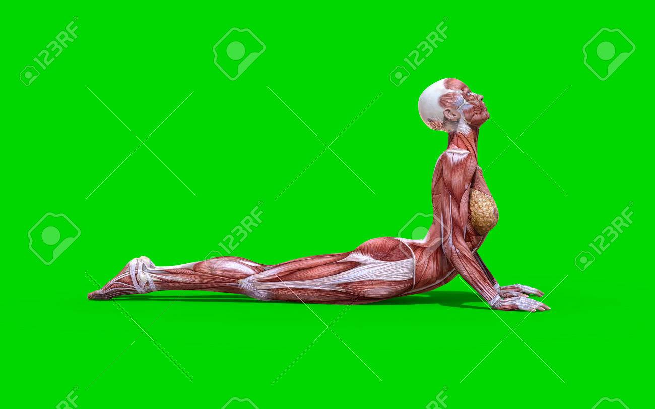 3D Digital Render Of A Snake Pose Female Anatomy Figure With.. Stock ...