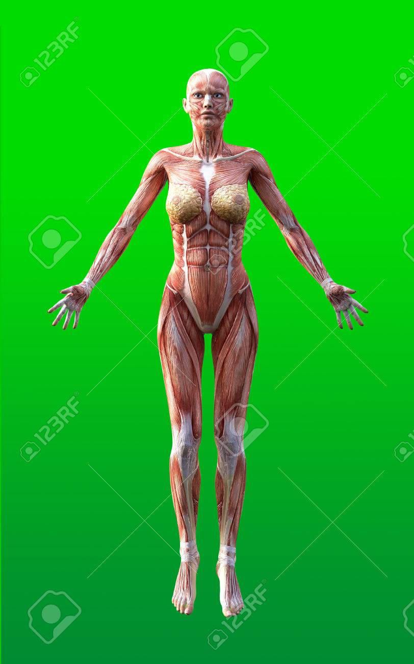 3D Render Of Female Figures Pose With Skin And Muscle Map On.. Stock ...