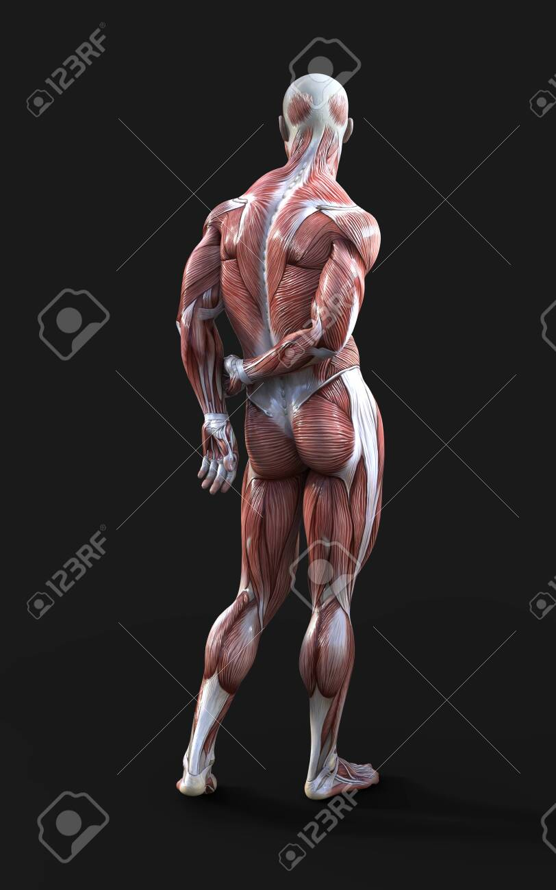 3D render of male figures pose with skin and muscle map on dark - 138154306