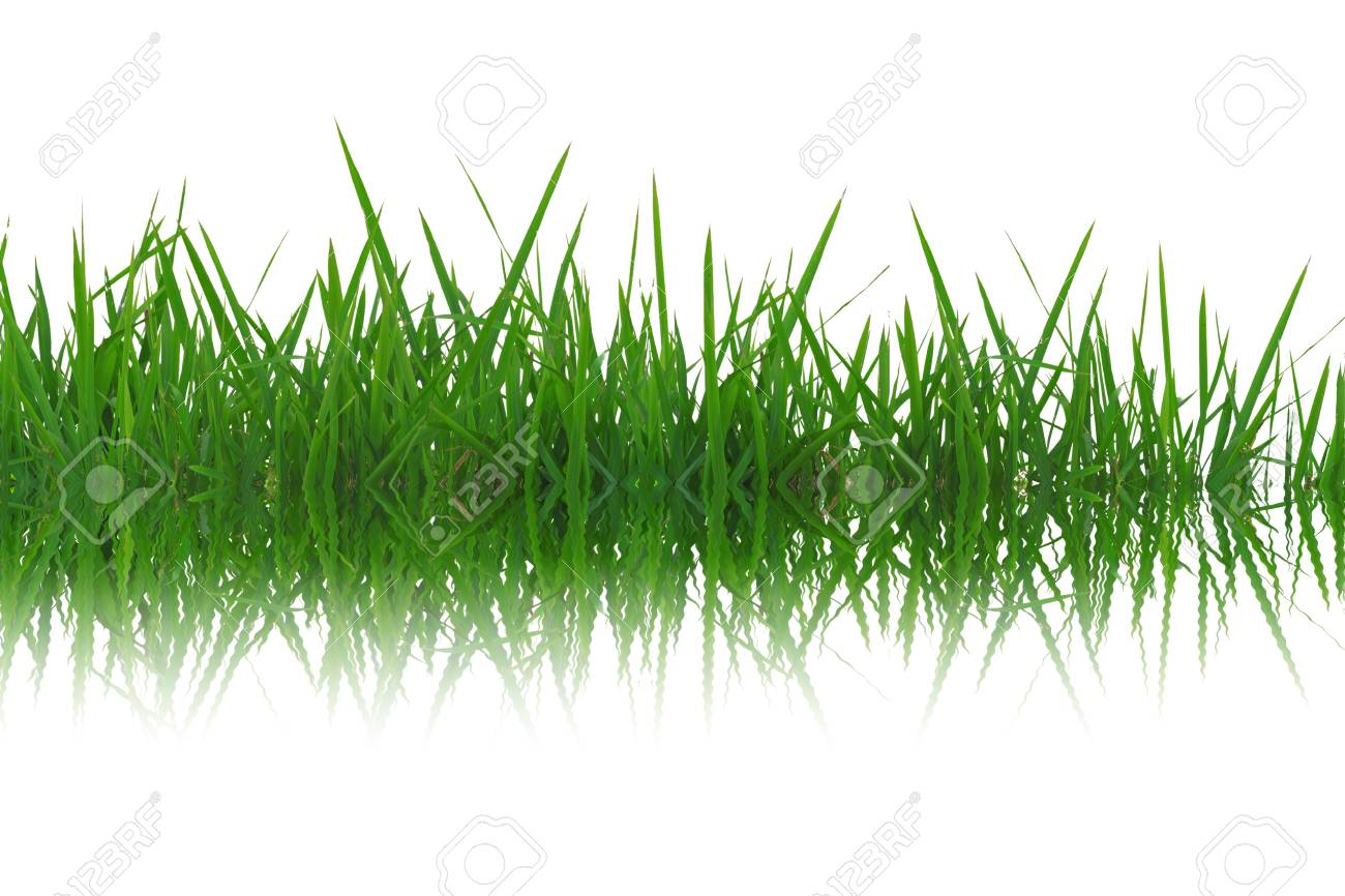 Grass reflection in the water. Stock Photo - 12004296