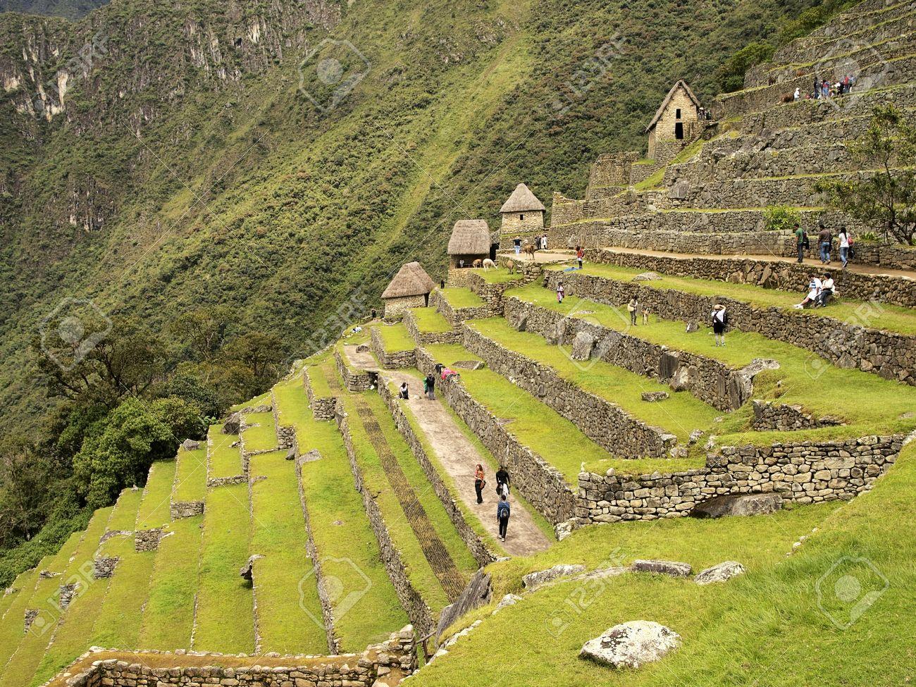 Cultivos En Terrazas En El Machu Picchu Perú