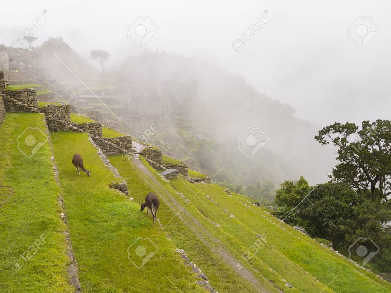 Los Cultivos En Terrazas En El Sector Agrícola Superior Del Machu Picchu Machu Picchu Distrito Provincia De Urubamba Cusco Perú