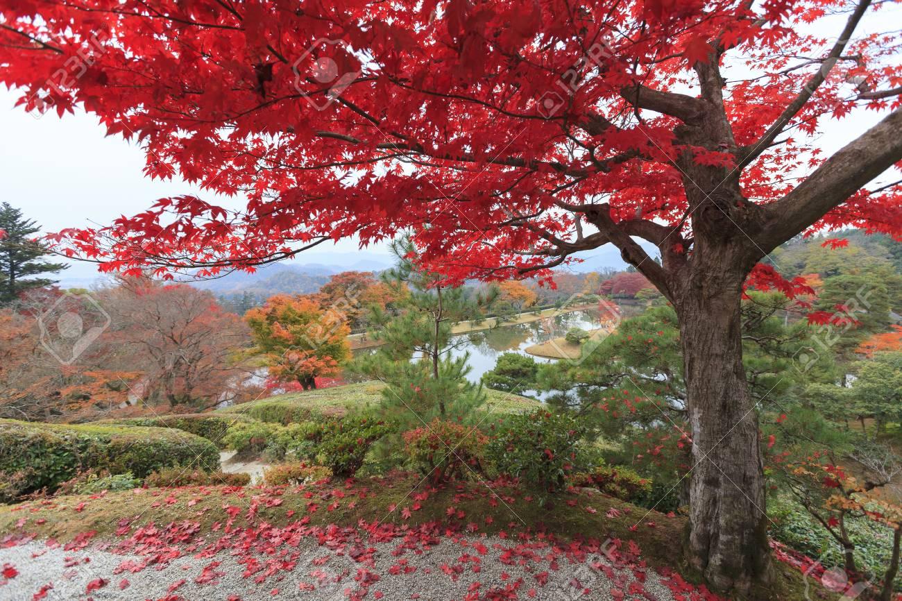 Jardin Japonais A L Automne La Zone Shugakuin Kyoto Japon Banque
