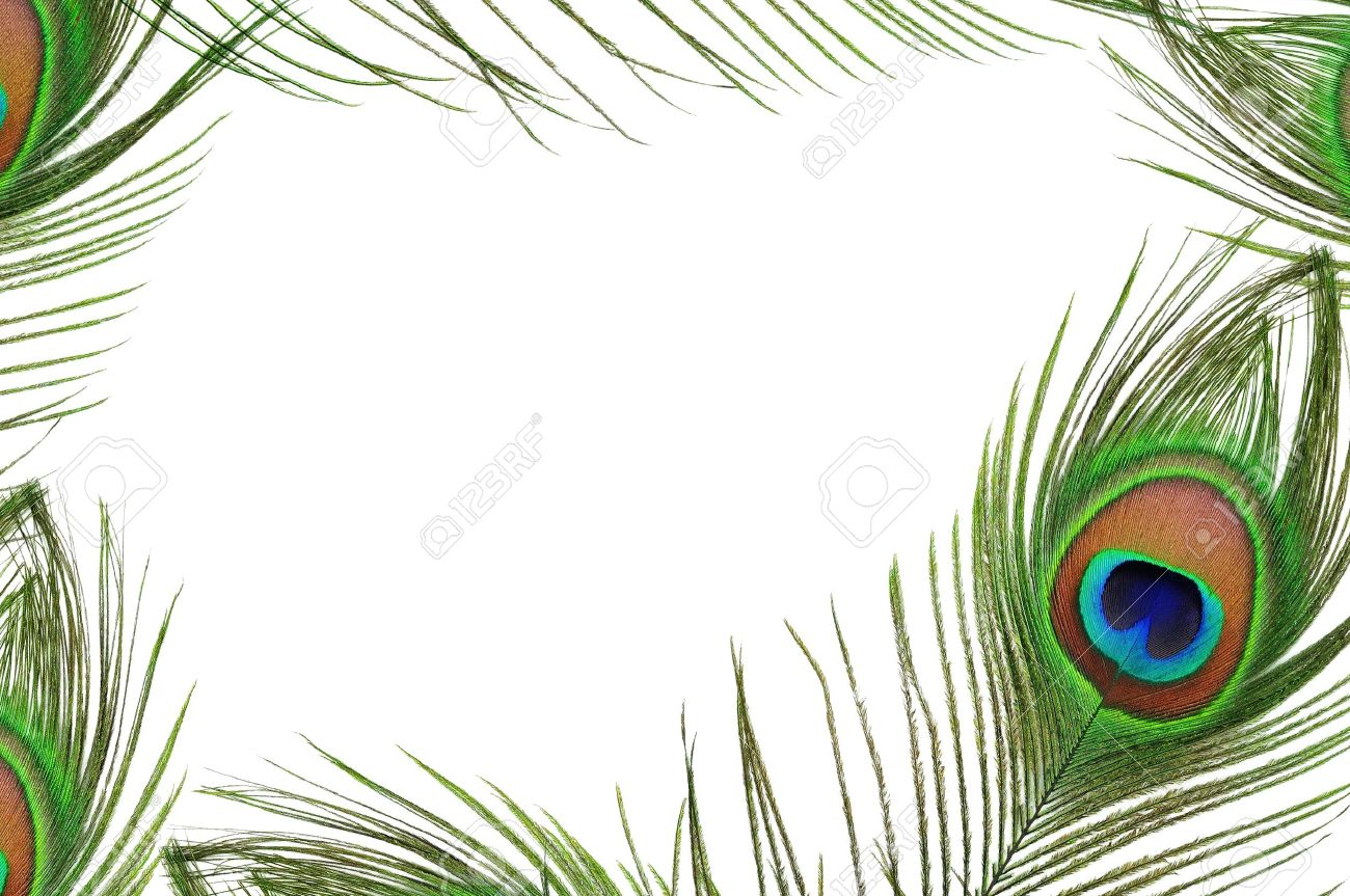 peacock feathers frame of peacock feather eye on white background stock photo
