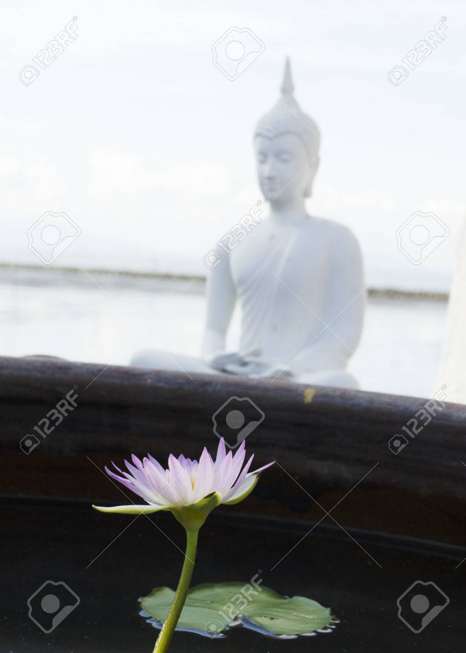 Close Up Of Lotus Flowers With Buddha Statue Background Stock Photo