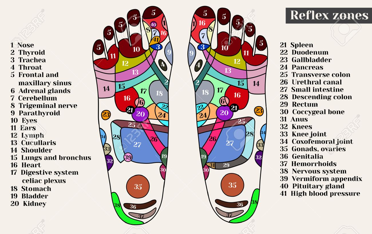 Acupuncture points on the feet. The reflex zones on the feet. Acupuncture. Chinese medicine. - 56909667