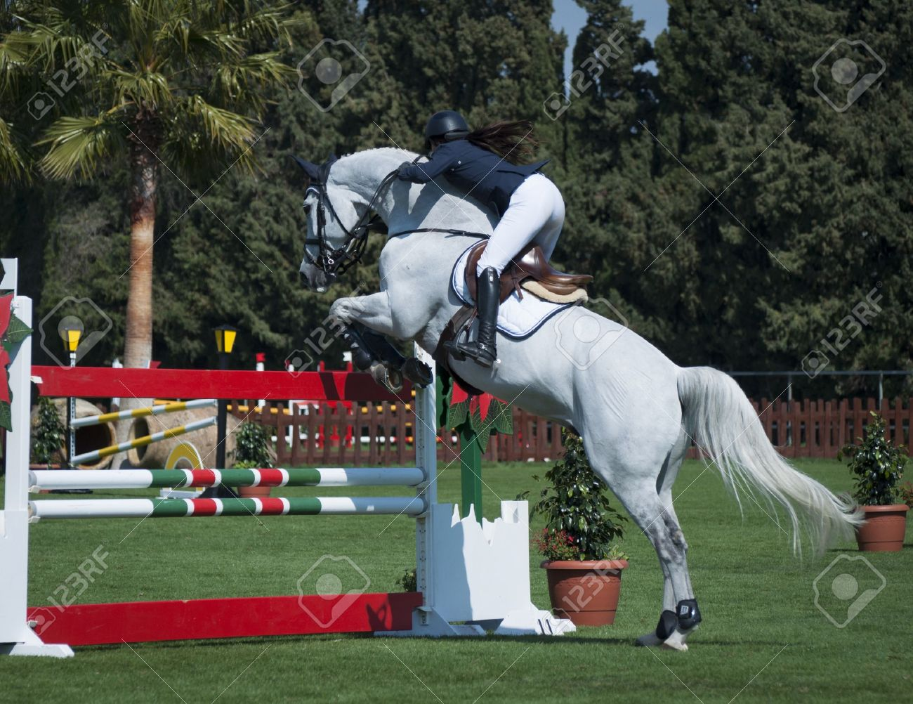 image cheval saut d'obstacle