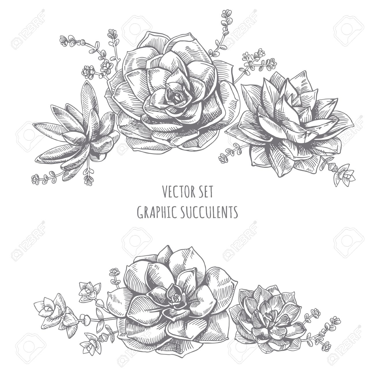 Floristic composition of succulents. Succulent drawing on white background. - 53198908
