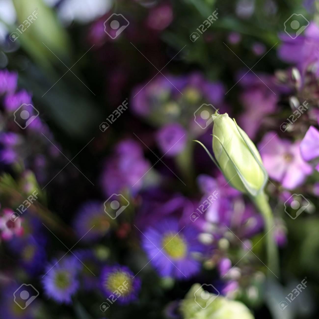 Foto Fiori Viola.Immagini Stock Bouquet Di Fiori Viola Primula Con Una Profondita