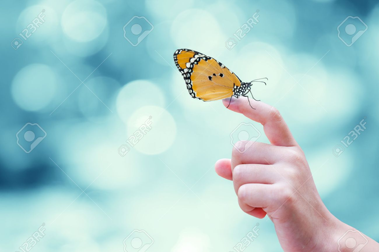 Beautiful butterfly sitting on the hand - 36375186