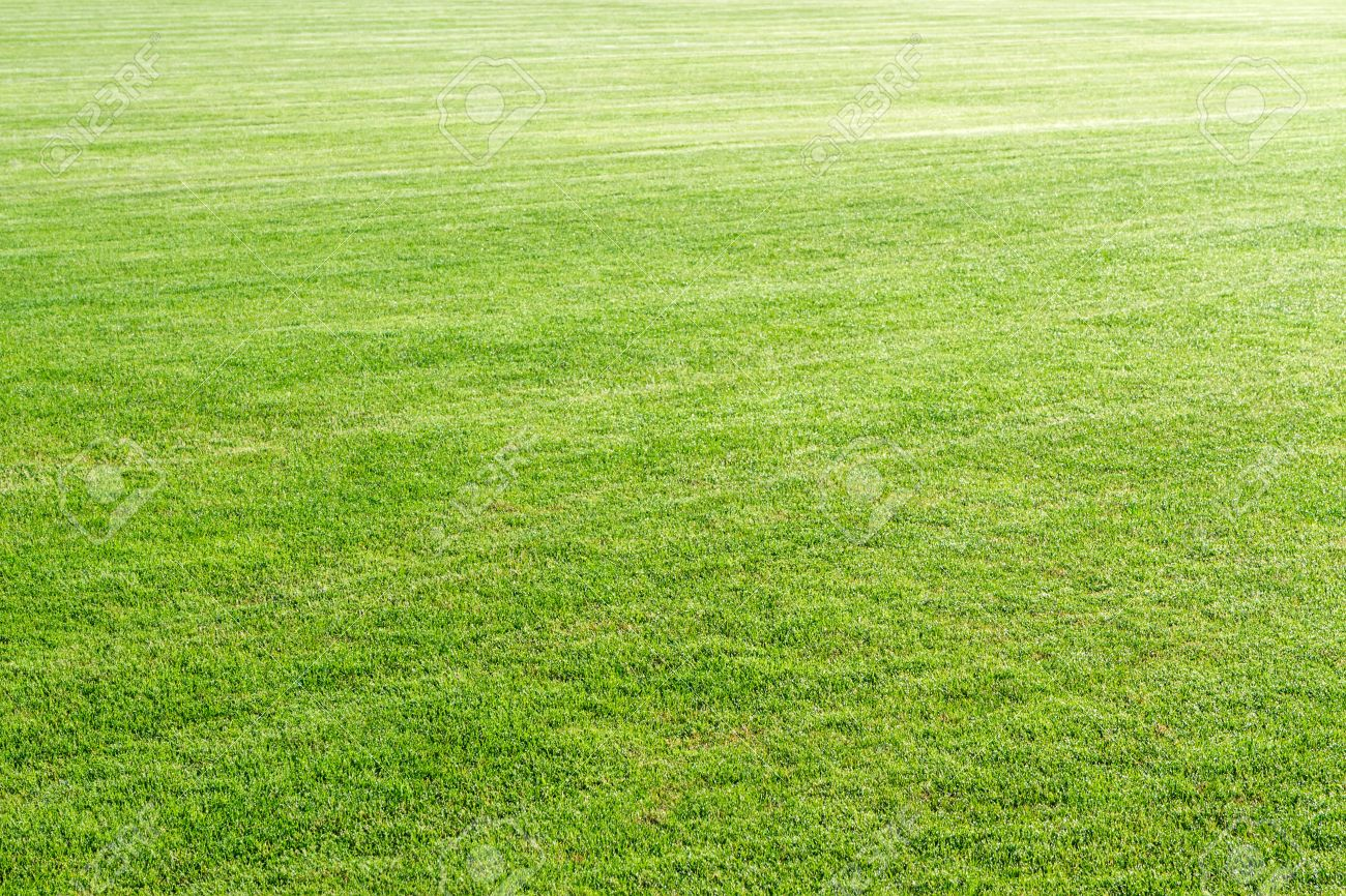 Natural Green Grass Field Background Stock Photo Picture And