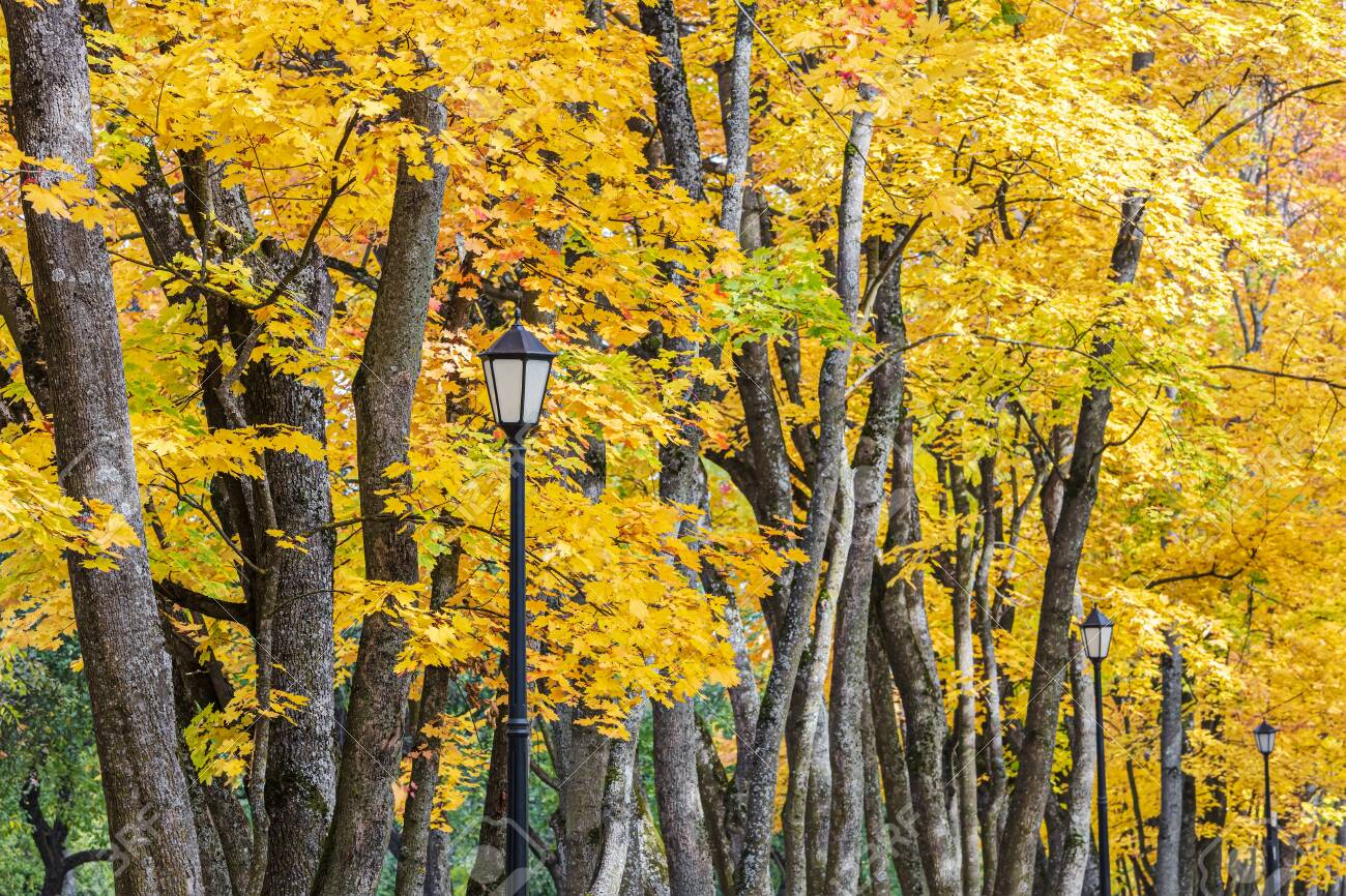 park tree tops with bright gold foliage and black retro lanterns. closeup view - 128596636