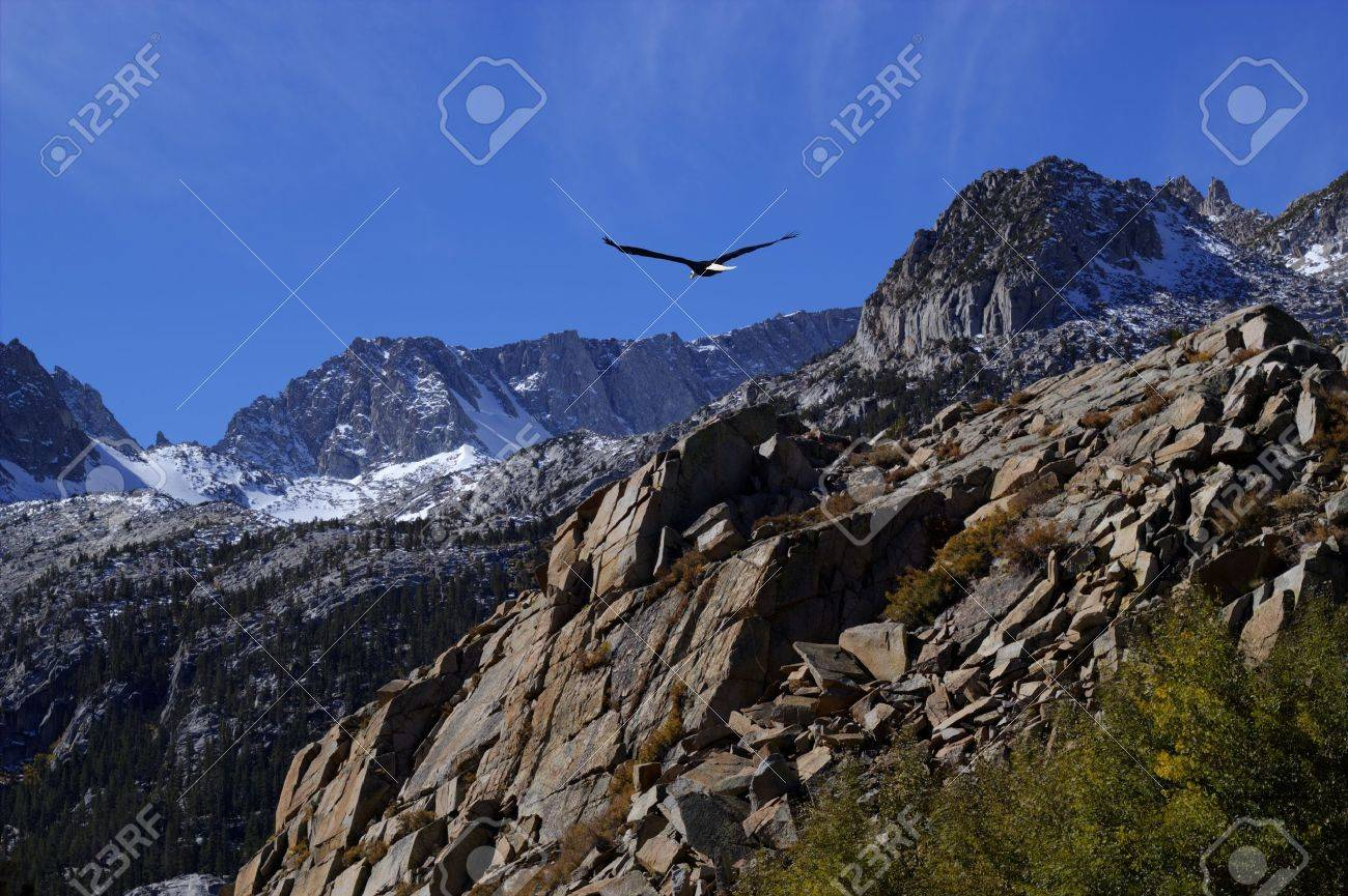 Bald eagle soaring over rocky peaks with a bright blue sky. Stock Photo - 11910690
