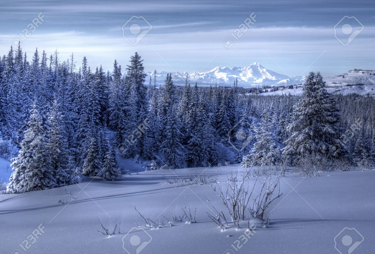 Alaskan winter landscape at dusk with snow, spruce trees, and volcanoes in the background. Stock Photo - 12175923