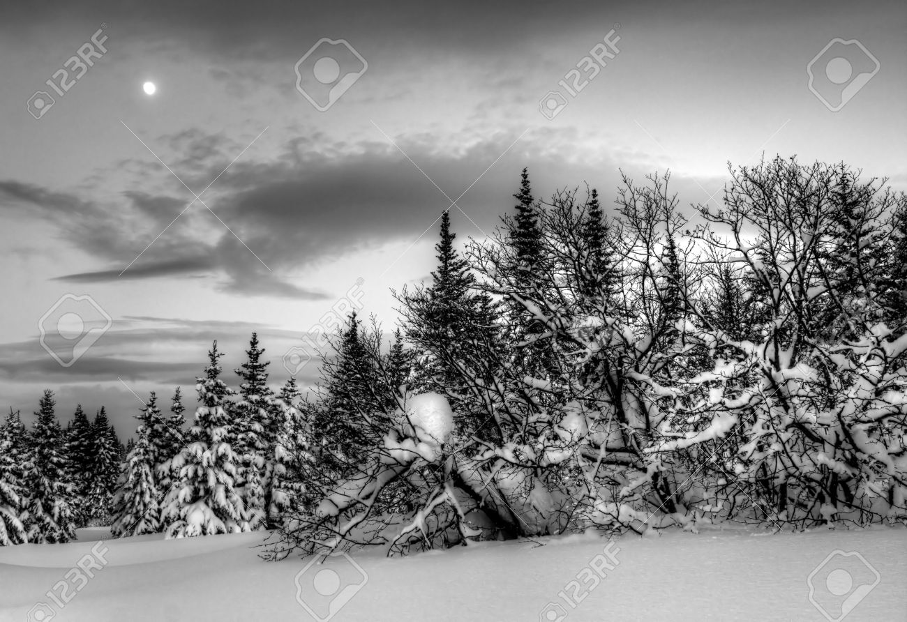 Winter evening landscape in Alaska with spruce trees, snow, clouds and a moon in black and white. Stock Photo - 12175930