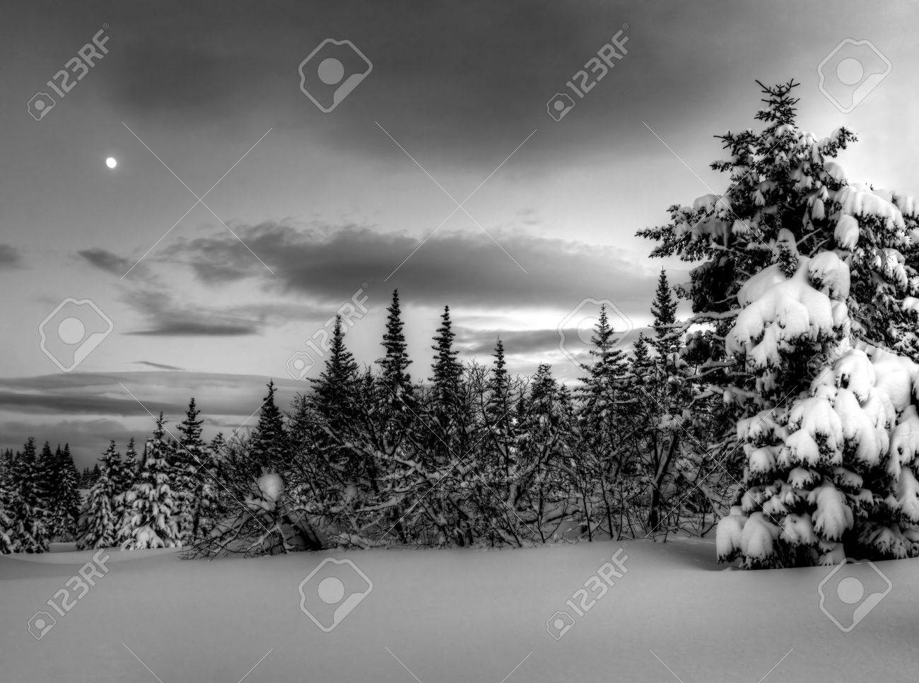 Alaskan winter night with moon, spruce trees and snow in black and white. Stock Photo - 12538755