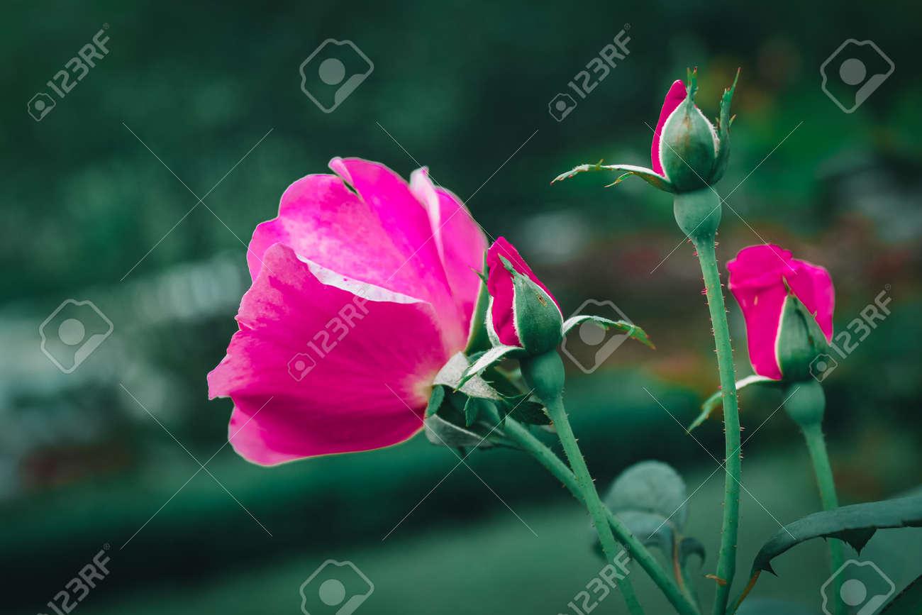 Flower in the garden - 155821413