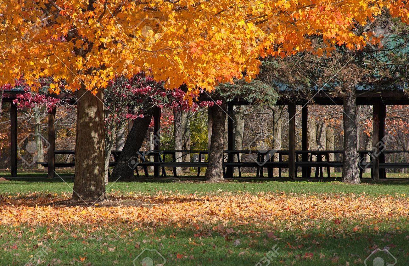 Herbst Baum Verliert Seine Blatter In Einer Gemeinschaft Park Vor