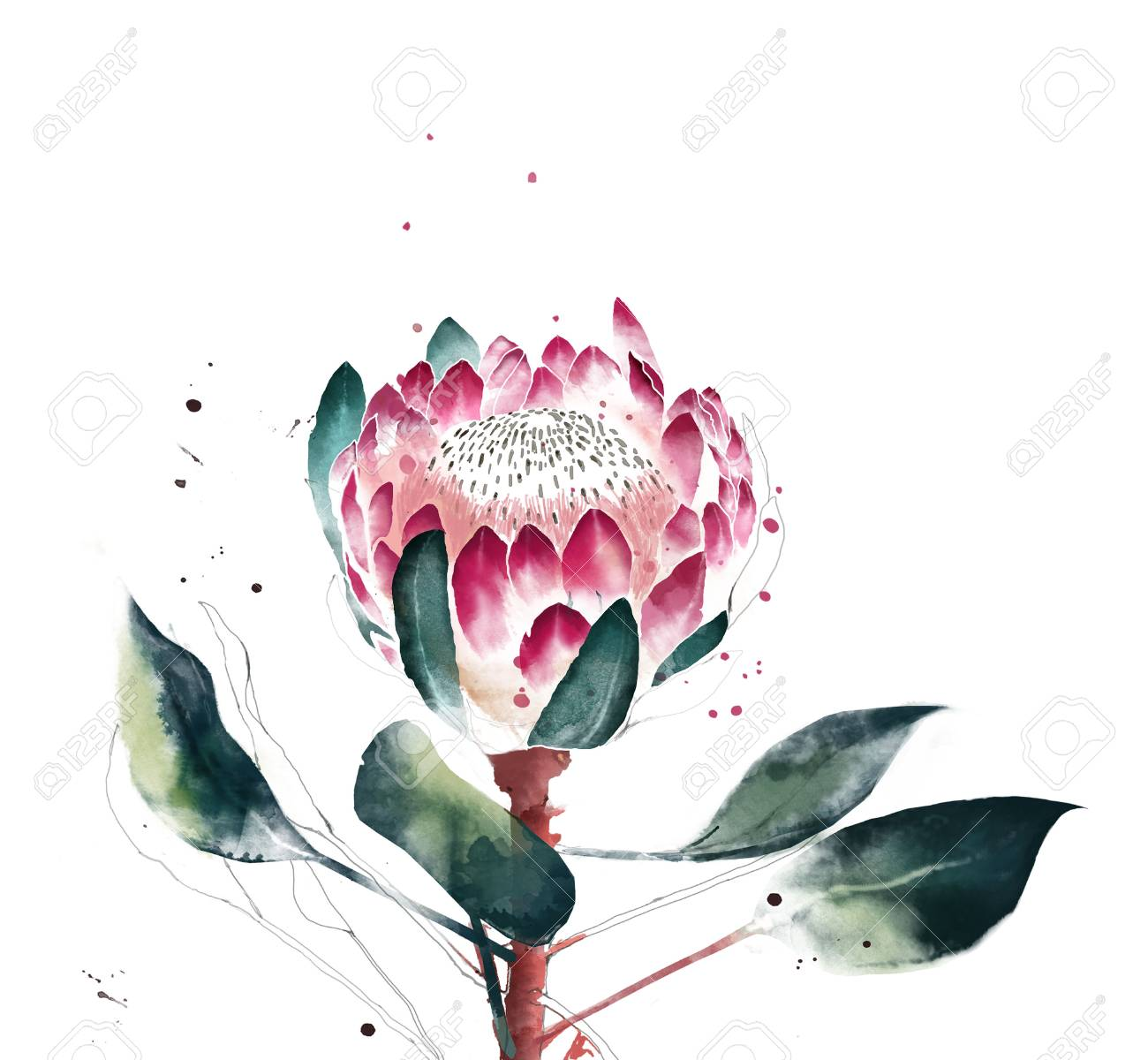Watercolor Protea Flower Hand Painted Single Of