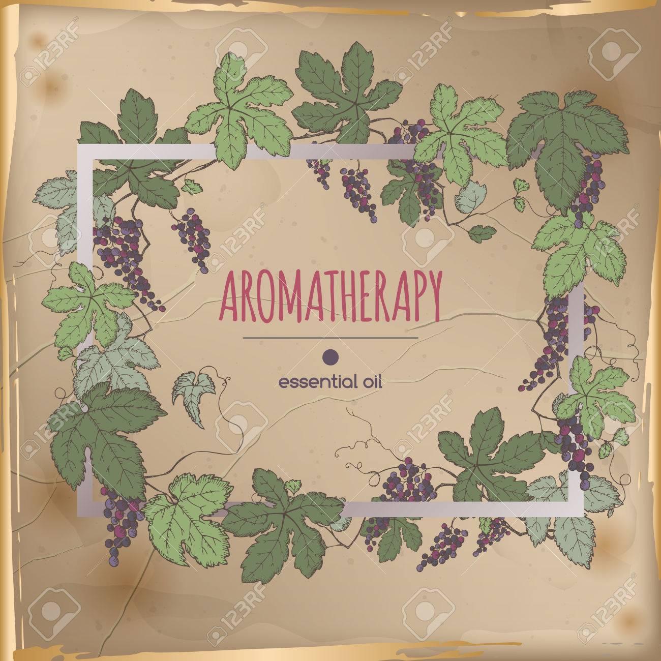 Elegante Rahmen-Vorlage Mit Farbe Trauben Früchte Und Blätter Skizze ...