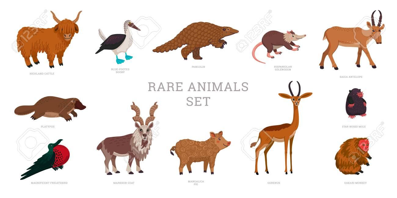 Rare animals collection. World Rarest Animals. Flat style vector illustration isolated on white background - 152163388