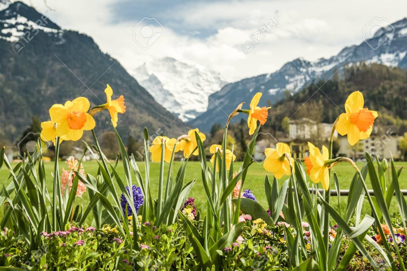 6 انشطة سياحية يمكن القيام بها في منتزه Höhematte في انترلاكن سويسرا