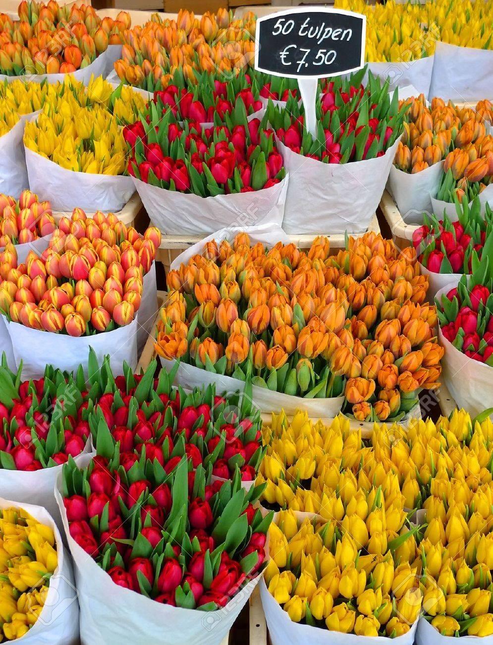 Bunte Tulpen auf Verkauf in Amsterdam Blumenmarkt Standard-Bild - 6509286