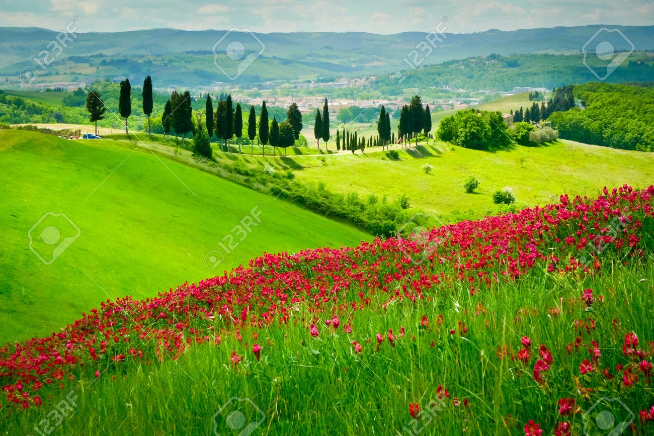 Hill covered by red flowers overlooking a road lined by cypresses on a sunny day near Certaldo, Tuscany, Italy Standard-Bild - 17306231
