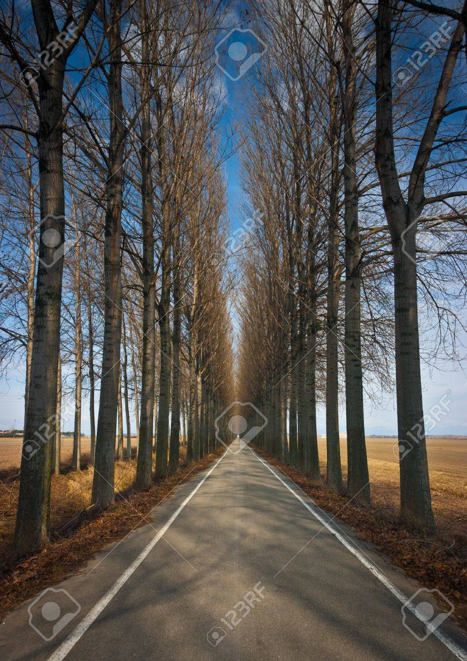 Long Straight Road Lined By High Trees In Winter Near Torviscosa ... for Straight Road With Trees  51ane