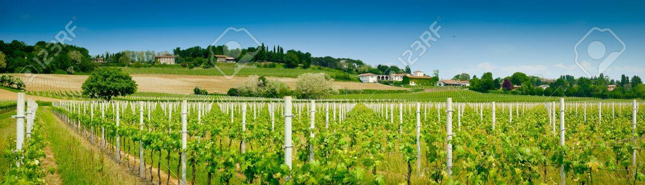 Vineyard and winery panoramic view in spring near Udine, Friuli, Italy Standard-Bild - 18537167